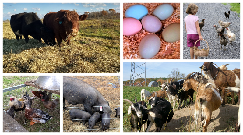 Collage of many animals found throughout Cross Island Farms
